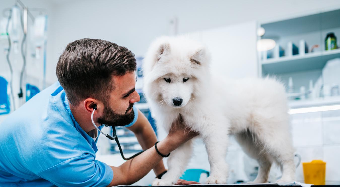 Mascotas: del cuidado y el cariño hacia la confusión